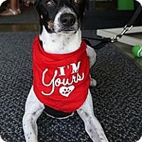 Adopt A Pet :: Peter - Baton Rouge, LA