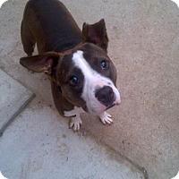 Adopt A Pet :: Ole - Kimberton, PA