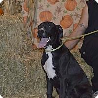 Adopt A Pet :: Alani - Lima, OH