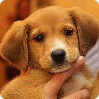 Adopt A Pet :: Crosby - Minneapolis, MN