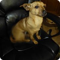 Adopt A Pet :: Lina - Glastonbury, CT