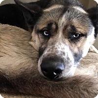 Adopt A Pet :: Kansas - Los Banos, CA