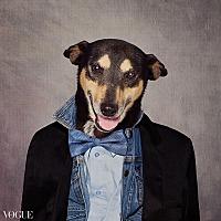 Adopt A Pet :: Fonzie - El Dorado, AR