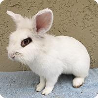 Adopt A Pet :: Panda - Bonita, CA
