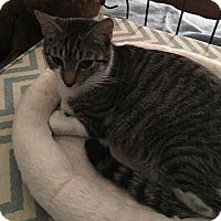Adopt A Pet :: Ivy - Houston, TX