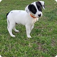 Adopt A Pet :: Paul - Atlanta, GA