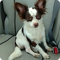 Adopt A Pet :: Bob (see note) - Mary Esther, FL