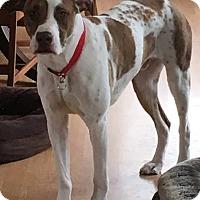 Adopt A Pet :: Jed - East Randolph, VT