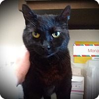 Adopt A Pet :: mona - Muskegon, MI