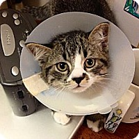 Adopt A Pet :: Berlioz - Beverly Hills, CA