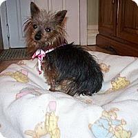 Adopt A Pet :: Millie - Fremont, CA