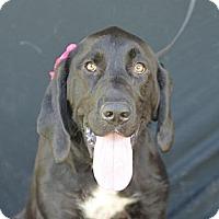 Adopt A Pet :: Mabel - Plano, TX