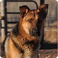 Adopt A Pet :: Mutz - Hamilton, MT