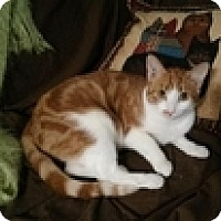 Adopt A Pet :: Anderson - Vancouver, BC