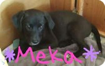 Labrador Retriever Mix Puppy for adoption in Walker, Louisiana - Meka