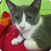 Adopt A Pet :: OWEN - Brea, CA