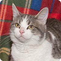 Adopt A Pet :: Paisley - Elmwood Park, NJ