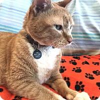 Adopt A Pet :: Javen - Alexandria, MN