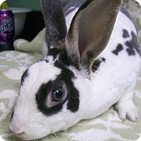 Adopt A Pet :: Harley - Harrisburg, PA