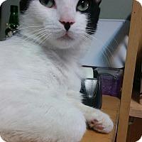 Adopt A Pet :: Smokey Joe - Los Angeles, CA