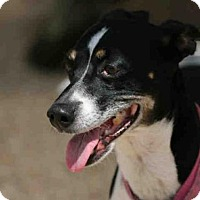 Adopt A Pet :: DIAMOND - Lacombe, LA
