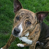 Adopt A Pet :: Ivan - Lake Odessa, MI