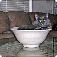 Adopt A Pet :: Blues - Deerfield Beach, FL