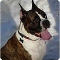 Adopt A Pet :: COBE - Sunderland, MA