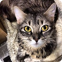 Adopt A Pet :: Willow - New York, NY