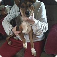Adopt A Pet :: Jordan - Chewelah, WA