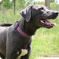 Adopt A Pet :: Brooklyn - Natchitoches, LA