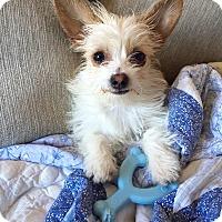 Adopt A Pet :: Lemmy - Mission Viejo, CA