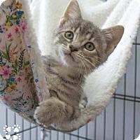 Adopt A Pet :: Megan - Merrifield, VA