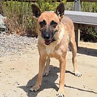 Adopt A Pet :: Alsace - San Diego, CA