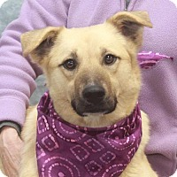Adopt A Pet :: Sophie-PENDING - Garfield Heights, OH