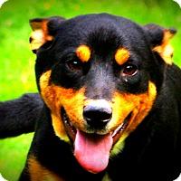Adopt A Pet :: Bennington - Glastonbury, CT
