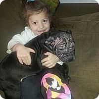Adopt A Pet :: Kringle - East Rockaway, NY