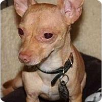Adopt A Pet :: Newt - Scottsdale, AZ