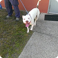 Adopt A Pet :: Aspen - Berlin, CT