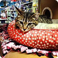 Adopt A Pet :: Rosa - Chesterfield Township, MI