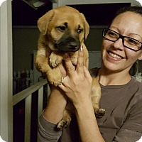 Adopt A Pet :: HARRY - Winnetka, CA