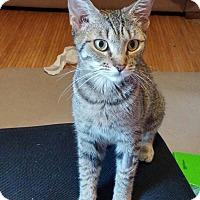Adopt A Pet :: Stella - Parkton, NC
