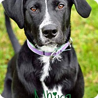 Adopt A Pet :: Nhira - Pleasant Plain, OH