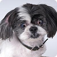Adopt A Pet :: Porche - Chicago, IL