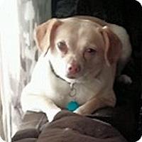 Adopt A Pet :: Tobie - Ogden, UT