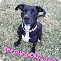 Adopt A Pet :: Jersey - Tiffin, OH