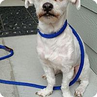 Adopt A Pet :: Timmy - Denver, CO