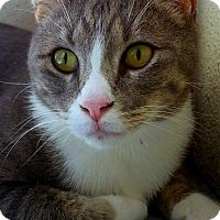 "Adopt A Pet :: Tony ""Smoke"" Stewart - Sarasota, FL"