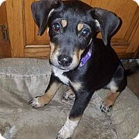 Adopt A Pet :: Dixie - Charlestown, RI