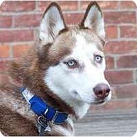 Adopt A Pet :: Juno - Belleville, MI